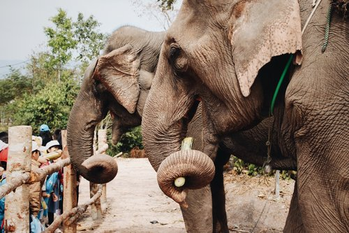 1 millón especies amenazadas de extinción por humanos